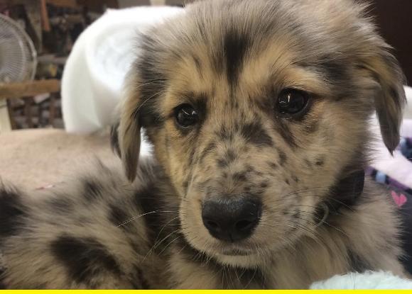 Freckle puppy.