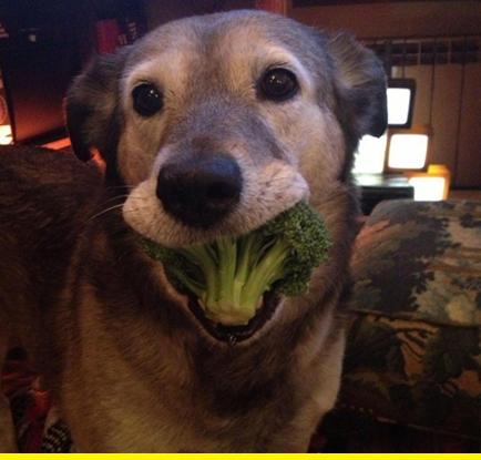 Broccoli pup.