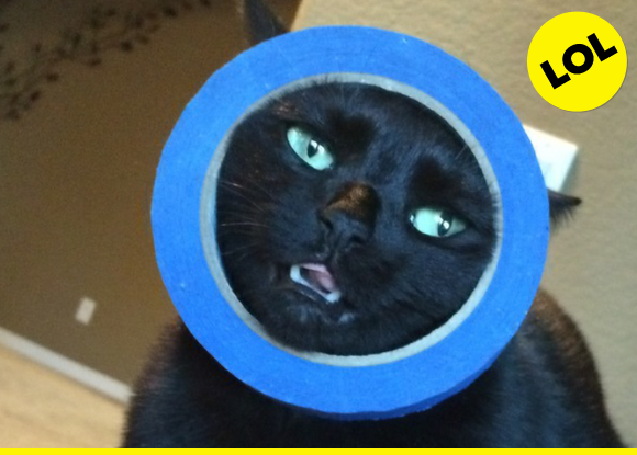 Cat in a roll of tape