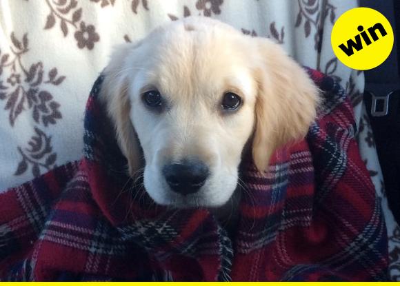 Puppy in a blanket alert!