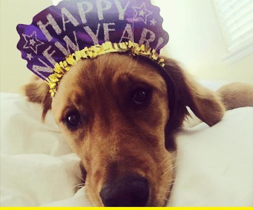 New year dog!